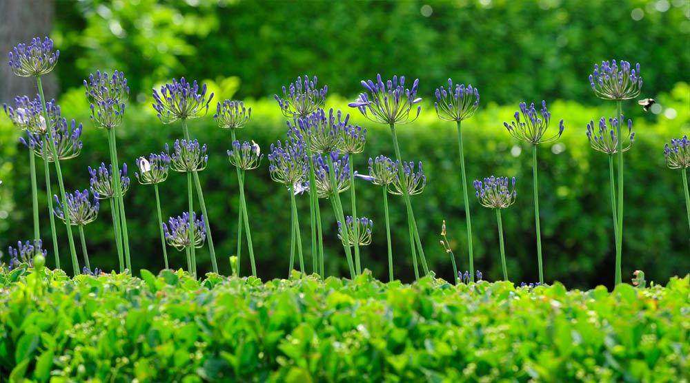 Jardins les jardins du chaigne for Atelier du jardin d acclimatation